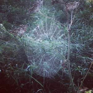 Spider web early morning dew photograph by Frances Livings